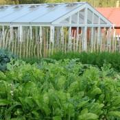 Köksträdgård