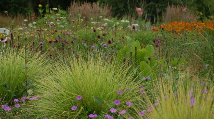 Sesleria, Geranium, Allium