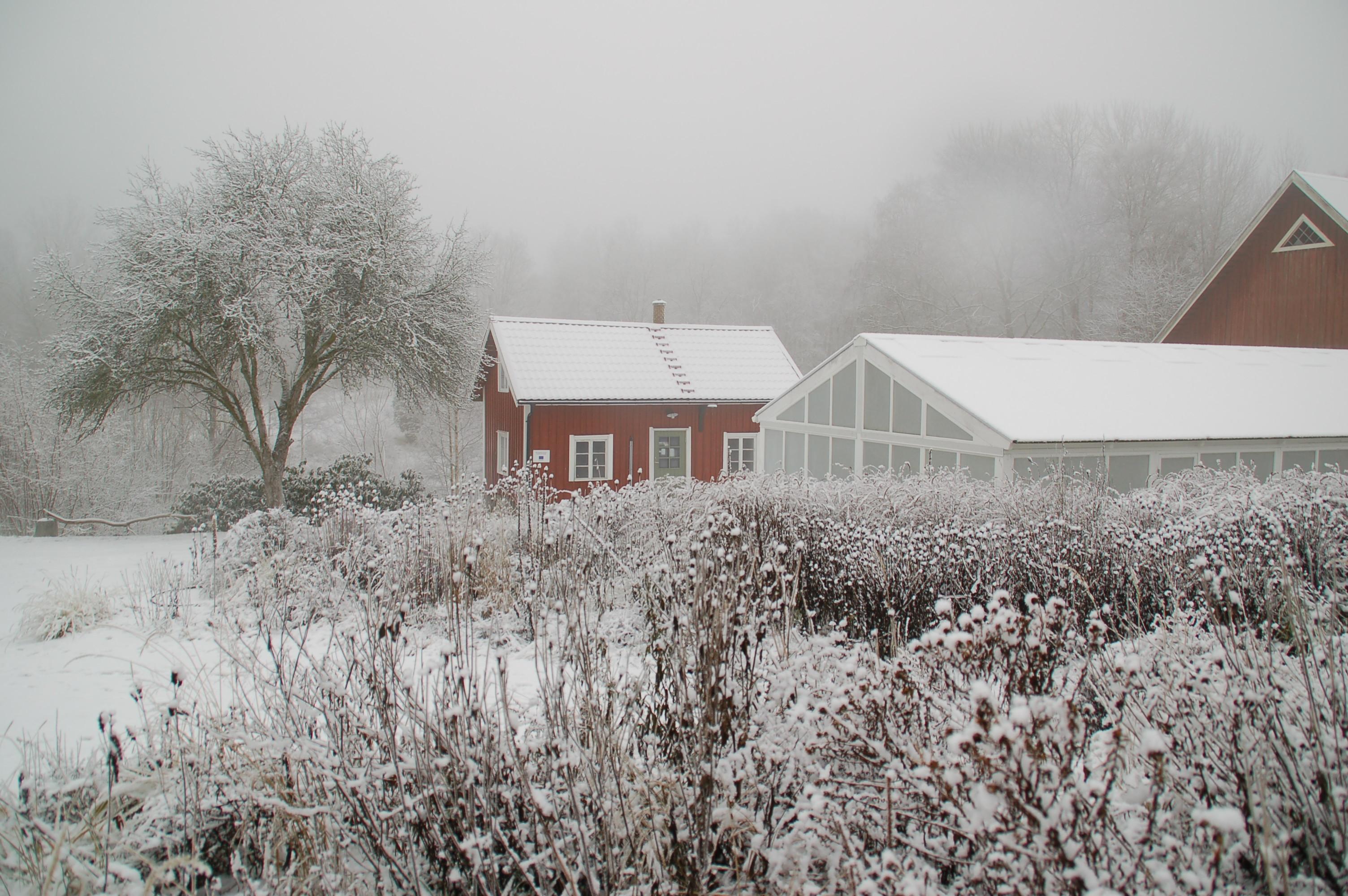 Trädgård januari 2015